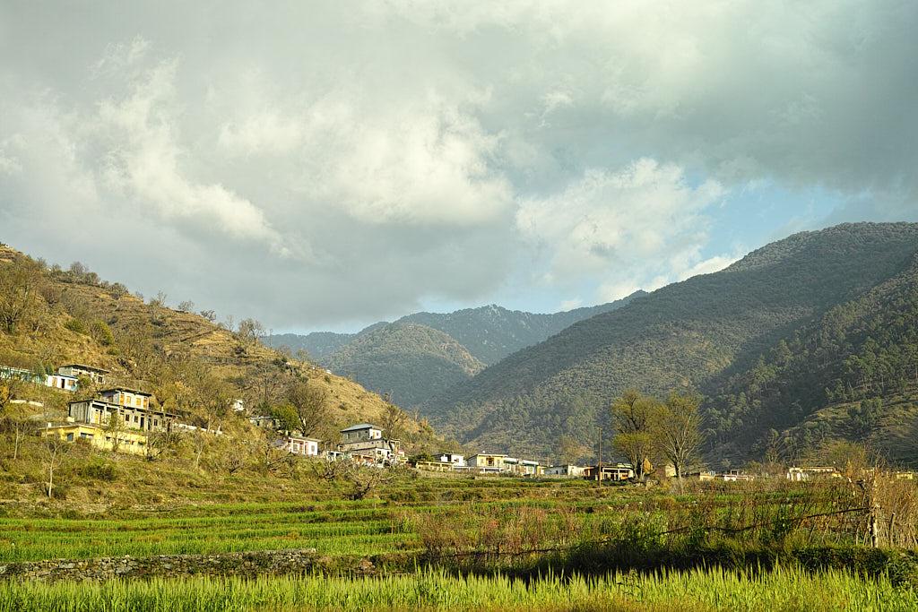 Lush green fields near Pantwari