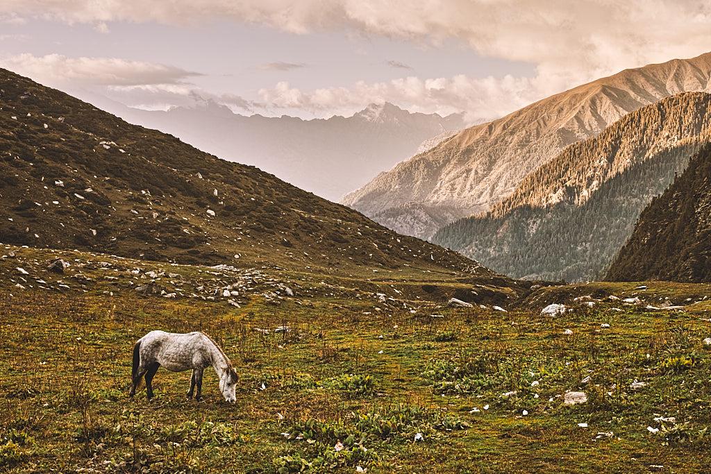 Jalsu Gothe to Bajoda trail is beautiful