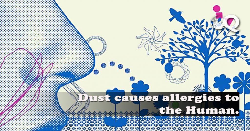 Dust Allergy Remedies