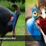World's Most Dangerous Bird