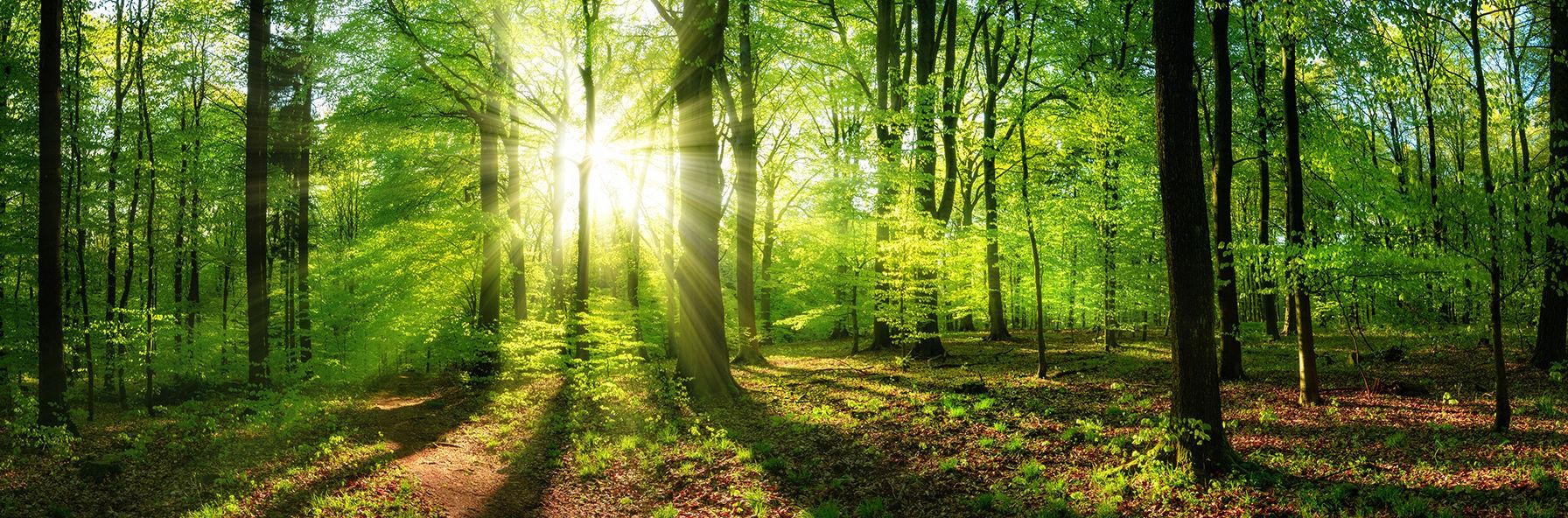 Načerpejte energii uprostřed přírody v klidném prostředí Lesních Lázní
