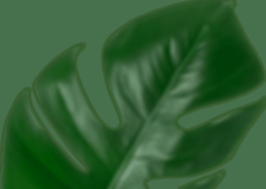 Grafika przedstawiająca liść
