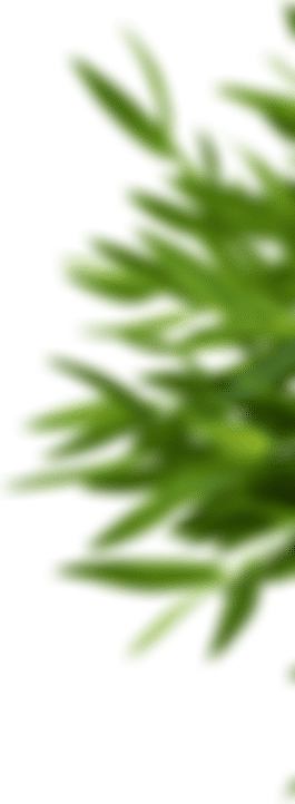 Poboczna grafika z rośliną.