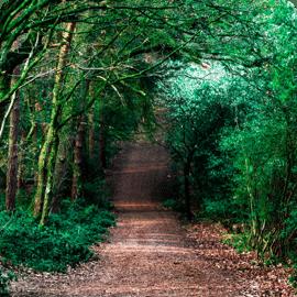 Pristine Roads