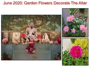 June 2020 Altar Flowers