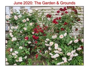 June 2020 Garden and Ground II
