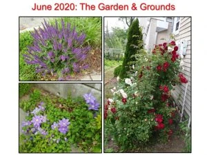 June 2020 Garden and Grounds I