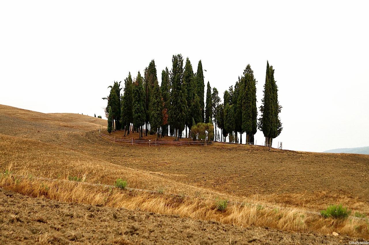 Gruppo di cipressi nelle colline attorno a San Quirico d'Orcia