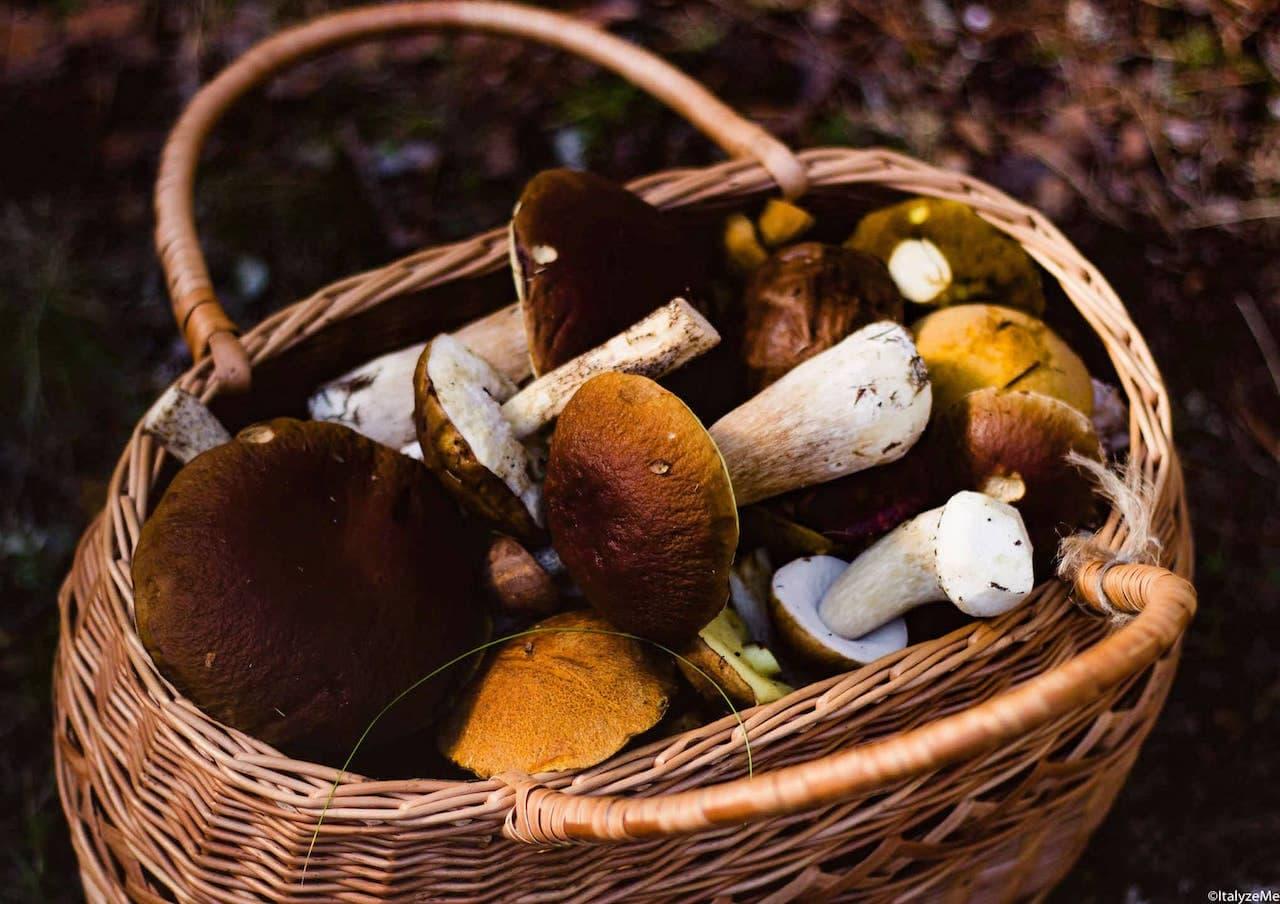 Cestino di funghi del bosco
