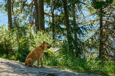 A dog in the mountain forest
