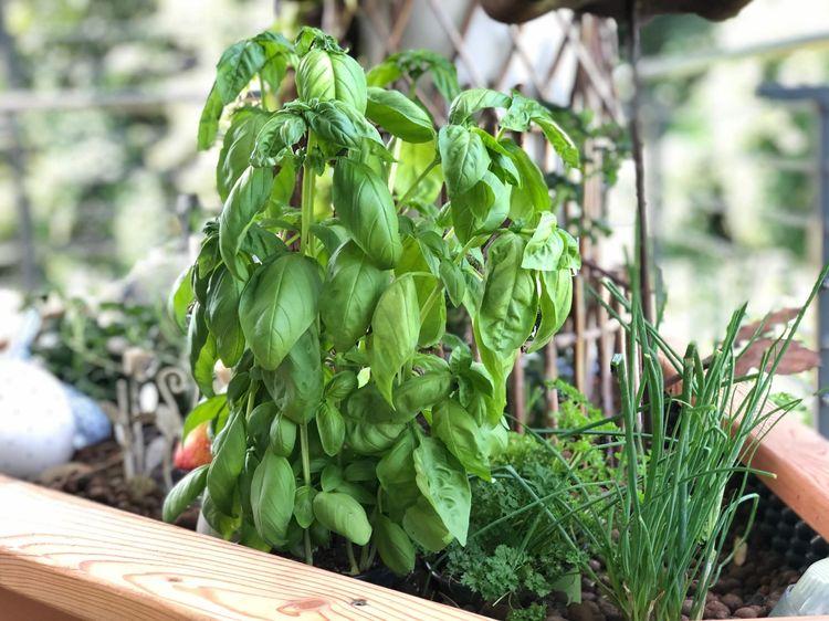 Fresh herbs from the garden.