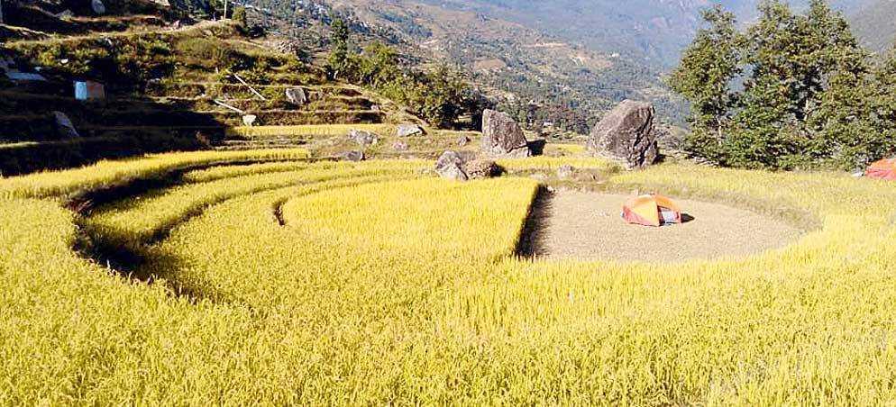 पाँचथरको मिक्लाजुङमा ४० मुरीभन्दा बढी धान फलाउने कृषकलाई एक लाख पुरस्कार दिईने