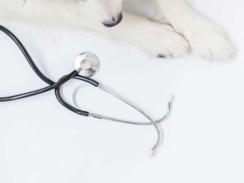 saúde animal cinomose