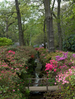 File:Isabella Plantation, Richmond Park, London - April 2011.jpg
