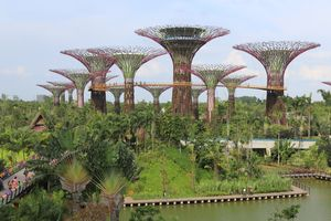 File:Supertree Grove, Gardens by the Bay, Singapore - 20120712-02.jpg