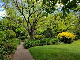 File:2019-11-10 EG Waterhouse National Camellia Gardens 2.jpg