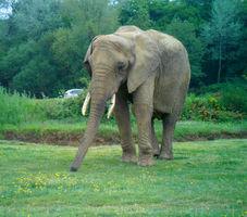 File:Planète sauvage - éléphant, vue de face.jpg