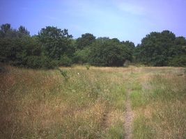File:Mitcham Common. - geograph.org.uk - 21884.jpg