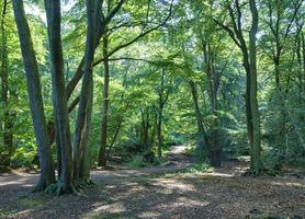 File:Epping Forest Centenary Walk 2 - Sept 2008.jpg