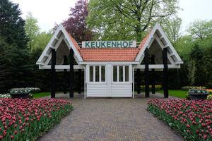 File:Keukenhof (42566266851).jpg