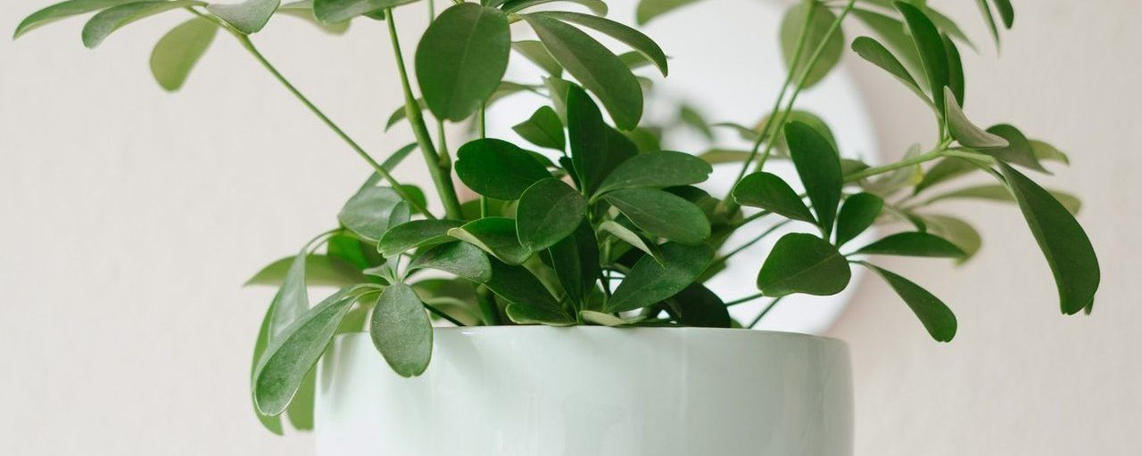 15 Best Indoor Plants for Your House