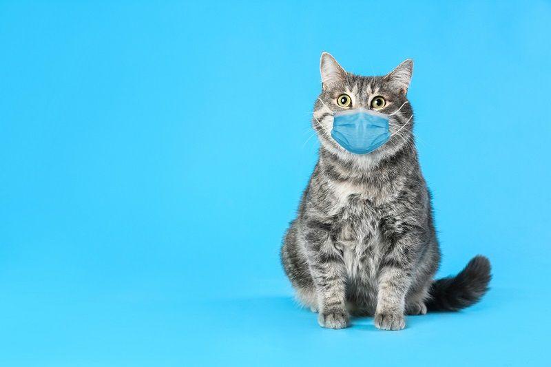 Distemper Kucing