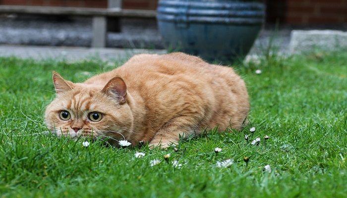 Informasi Tentang Kucing
