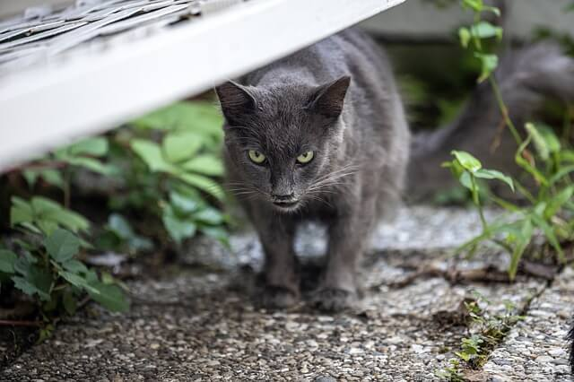 Cara Menjinakkan Kucing