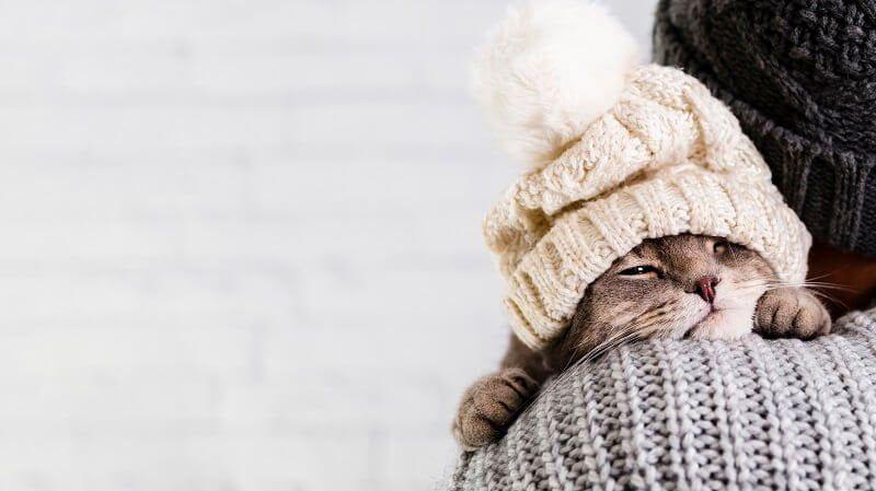 Cara Mengobati Kucing Pilek