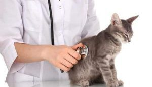 Tanda-Tanda Anak Kucing Sakit