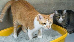 Jenis Pasir Kucing