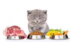 Cara Membuat Makanan Kucing Sendiri