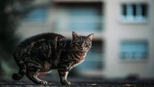 Jenis-Jenis Kucing di Indonesia