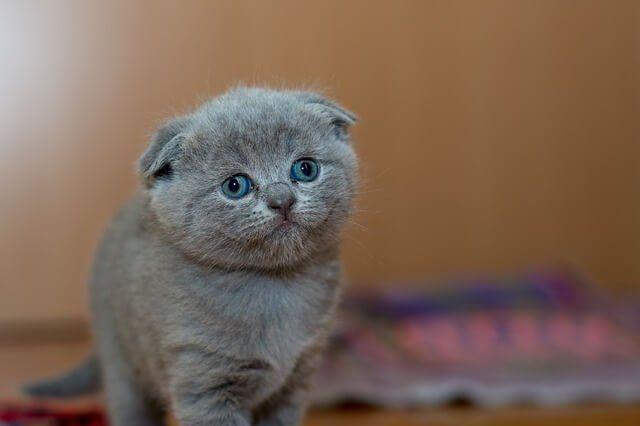Manfaat Pelihara Kucing