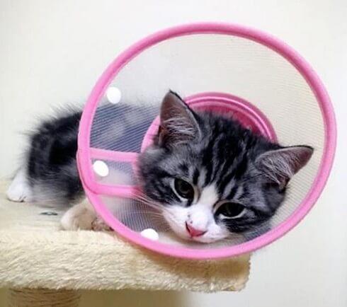 Obat Kucing Sakit