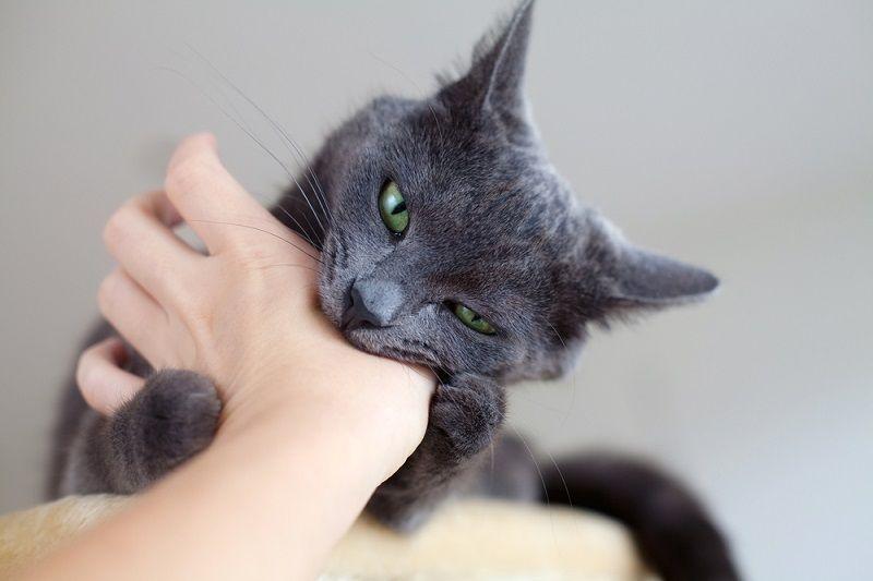 Kucing Suka Menggigit