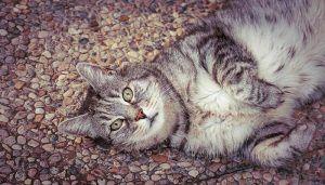 Kenapa Kucing Berguling