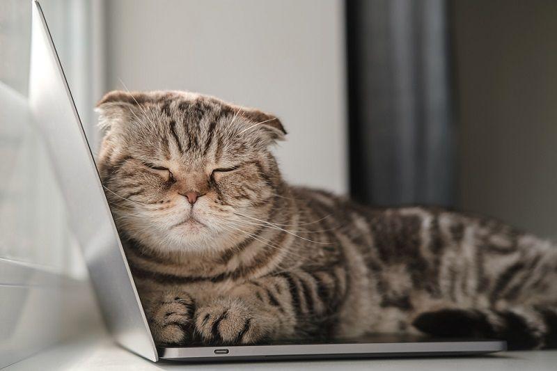 Kucing Tidur di Laptop