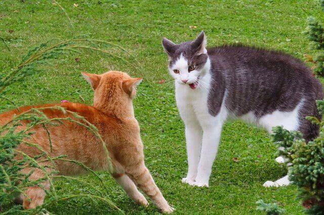 Yang Tidak Disukai Kucing