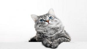 Alergi Bulu Kucing
