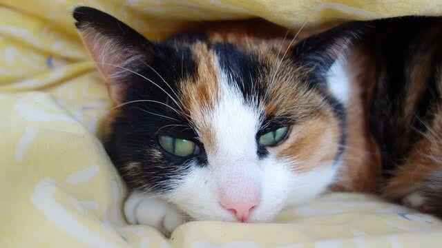 Tips Agar Kucing Panjang Umur