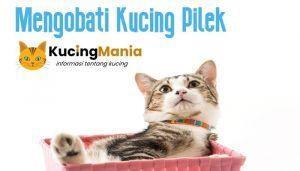 Obat Kucing Pilek