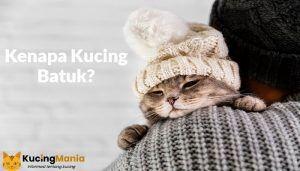 Kucing Batuk