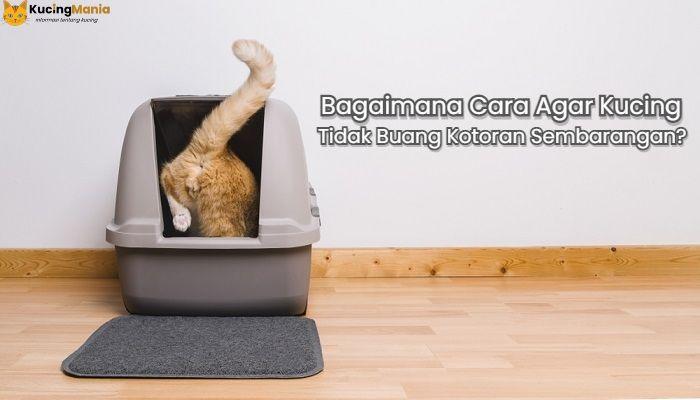 Cara Agar Kucing Tidak Buang Kotoran Sembarangan