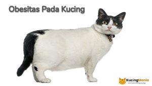 Kucing Obesitas