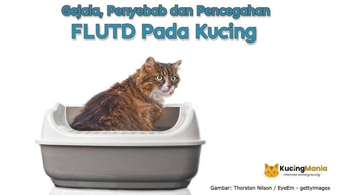 FLUTD Pada Kucing