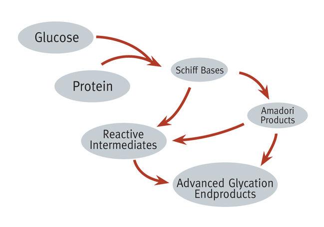 葡萄糖與蛋白質結合的不可逆產物:AGEs(Advanced Glycation Endproducts)