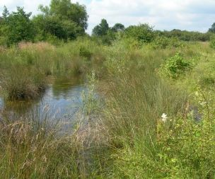 Image for link to Nature reserve