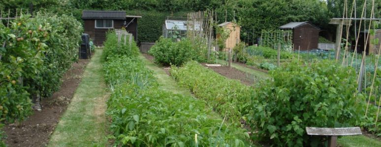 Allotments in Derby