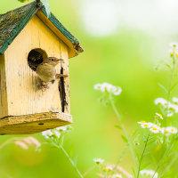 Make-a-Bird-Box.png